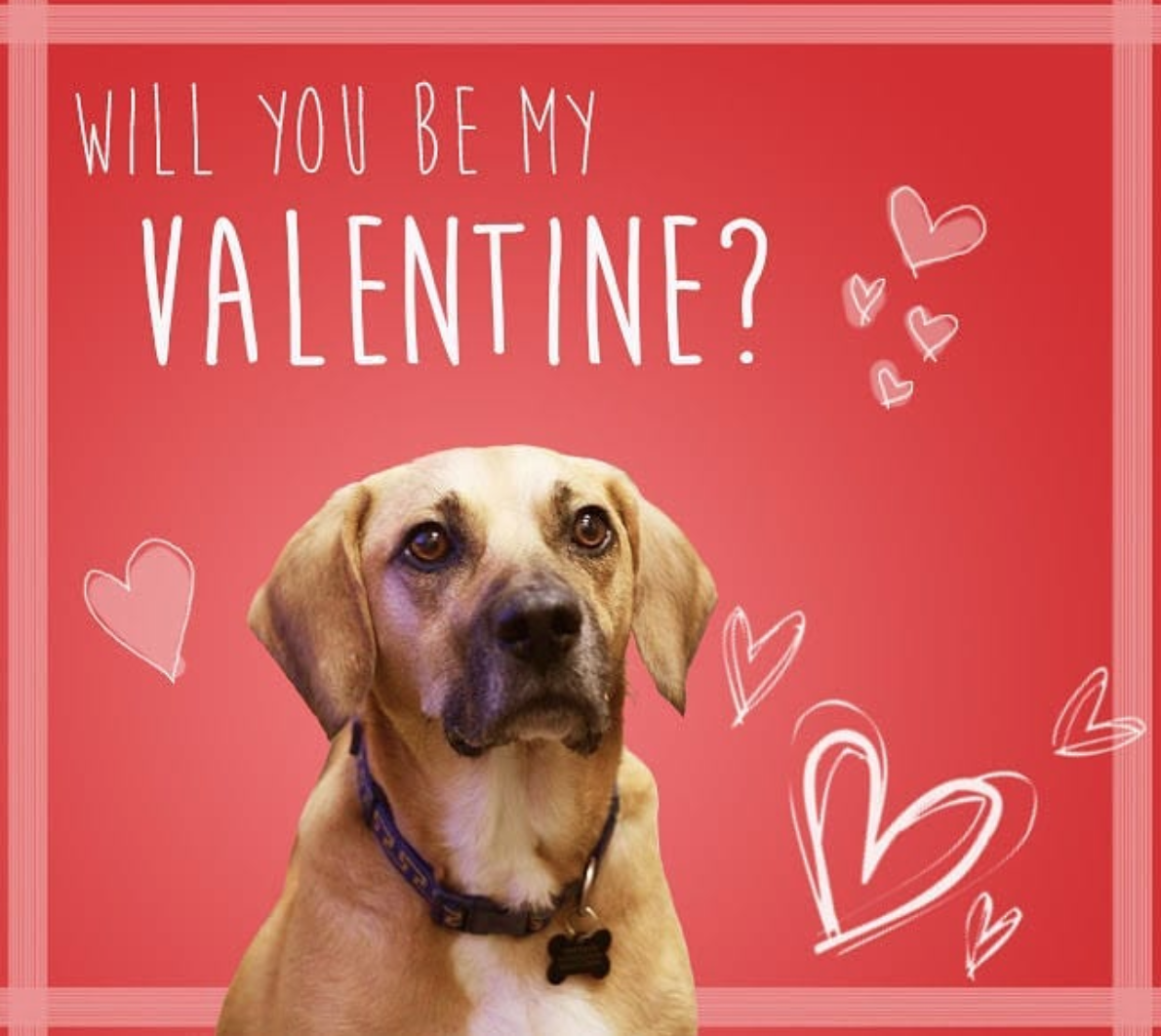 We know Valentine's Day isn't for everyone, but even if you're feeling the post-holiday blues, these D.C. dogs are here to lift your spirits. Here are some of the cutest pooches from Instagram to save you from your love hangover. (Image via @umddoglab)
