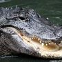 Alligator forces students to change classrooms at Royal Palm Beach HS
