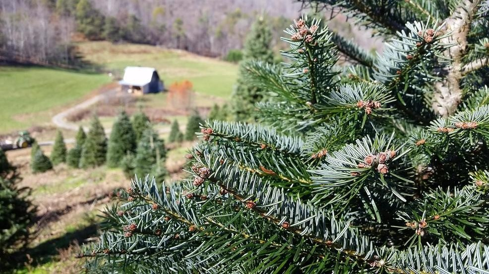 tips for cutting your own christmas tree - Cut Your Own Christmas Tree