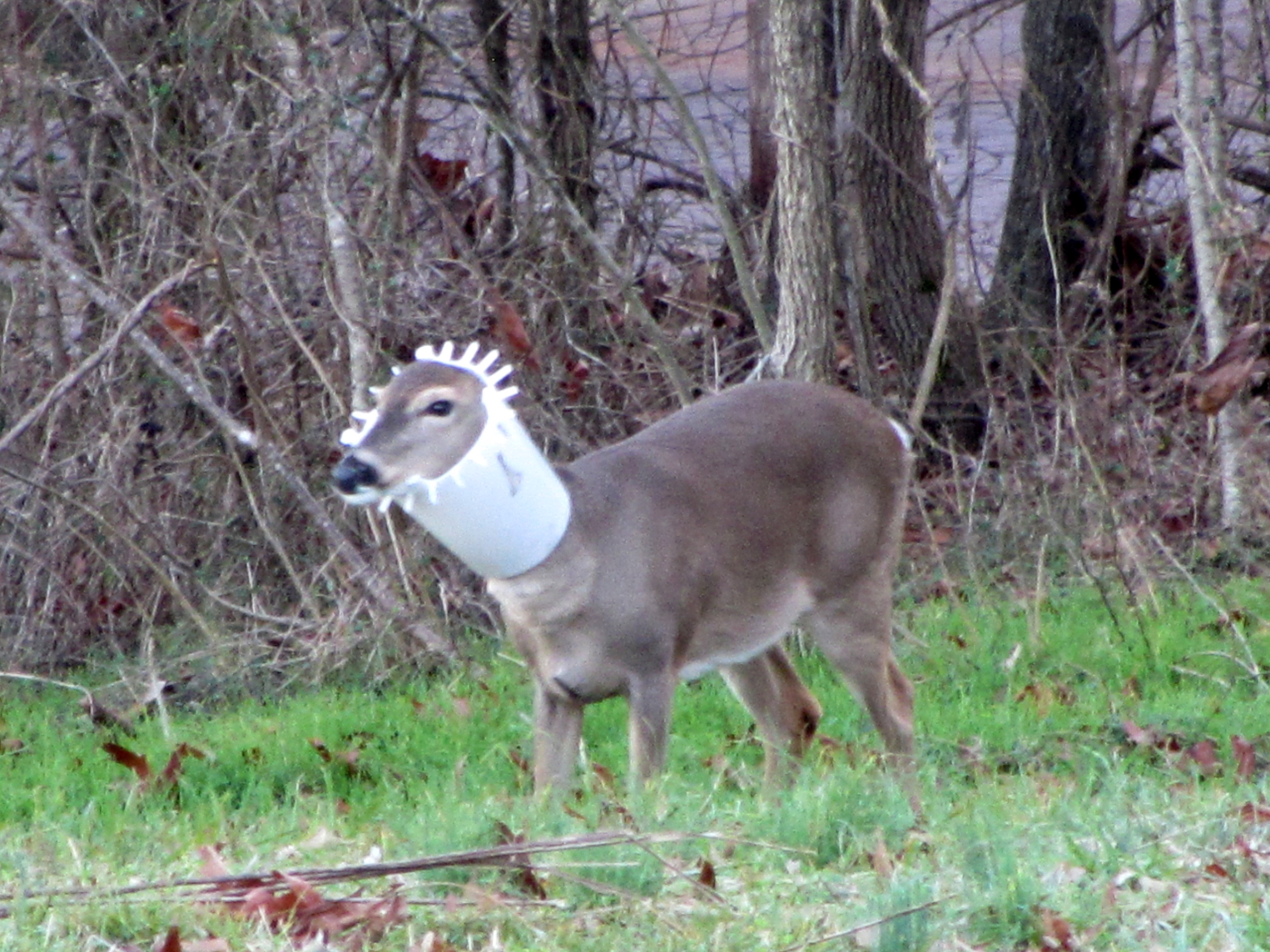by up flickr i my fr b feeder photos have in deer bucket this homemade