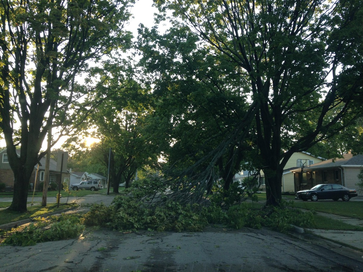 Aug. 14: Tree branches damaged by storm in Green Bay (WLUK/Andy Harbath)