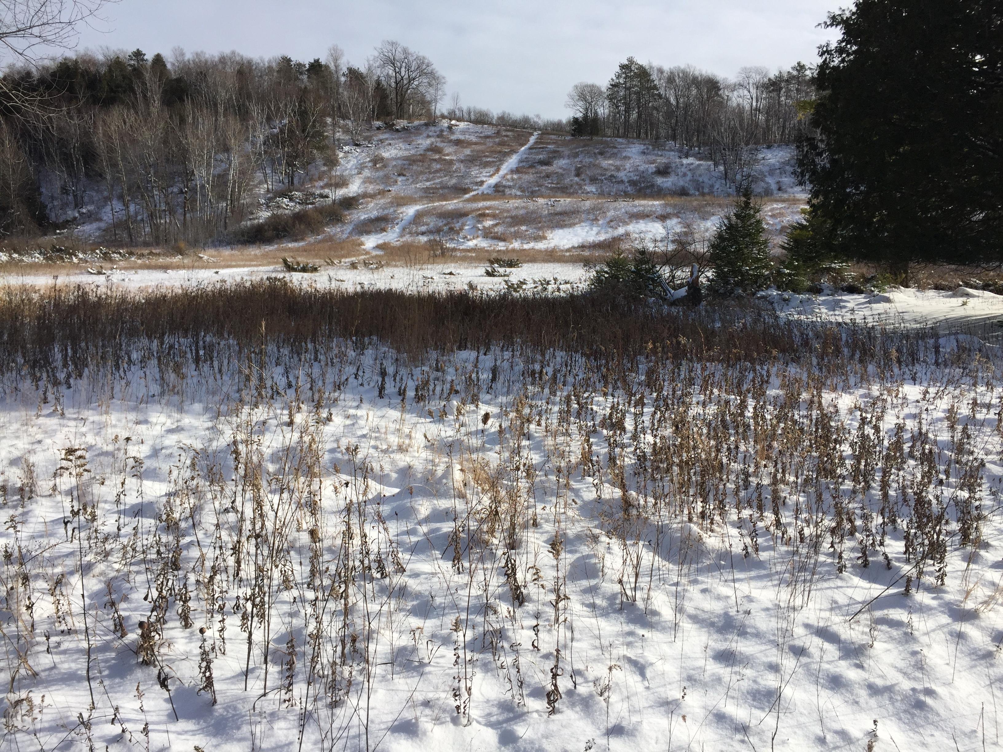 The former ski hill at Potawatomi State Park in the Door County Town of Nasewaupee is seen, Dec. 15, 2017. (WLUK/Eric Peterson)