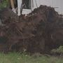 3-year-old recovering at hospital after storms cause tree to fall on home