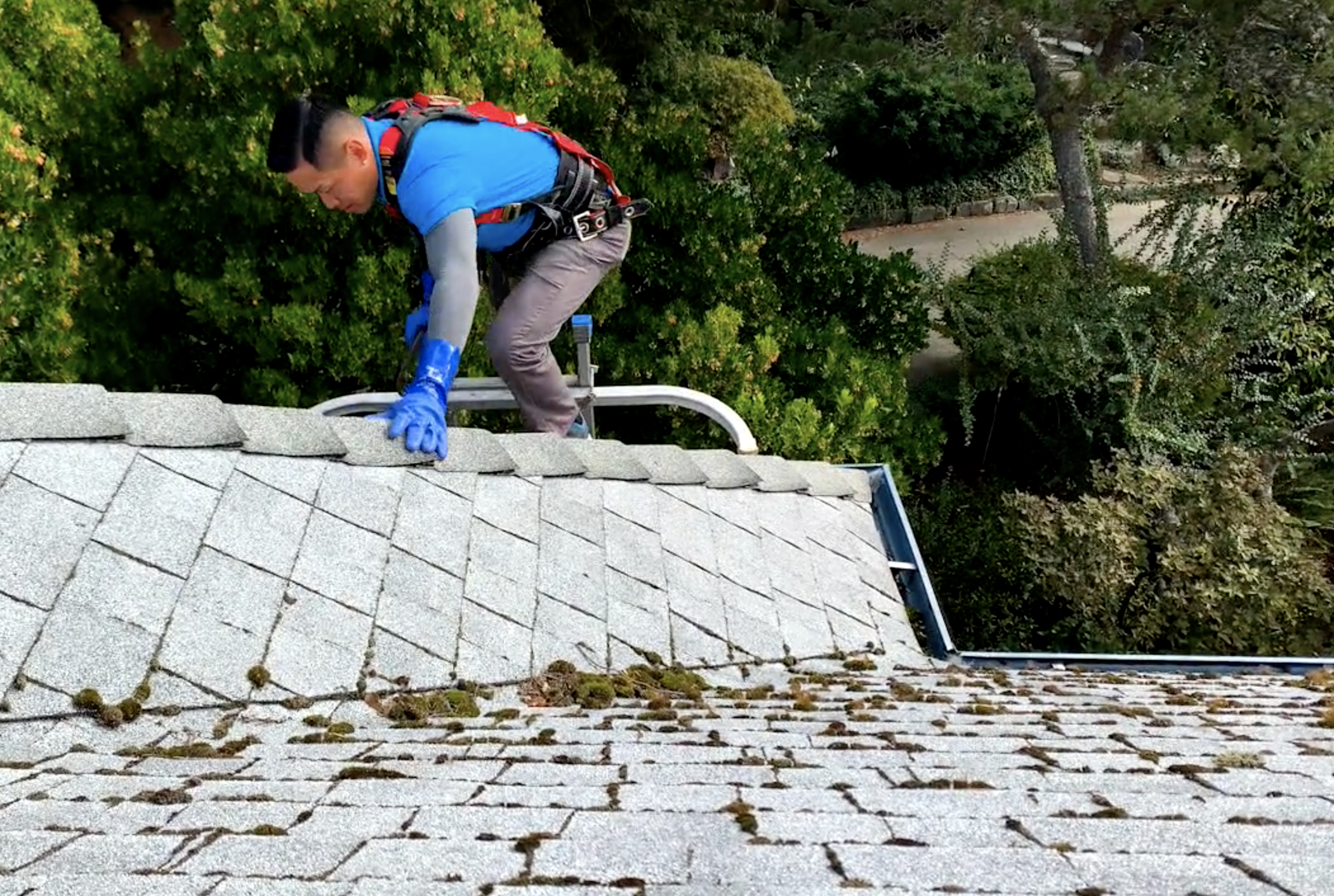 Johnny Tsunami offers exterior cleaning services that are safe for plants, soil and animals around your home.