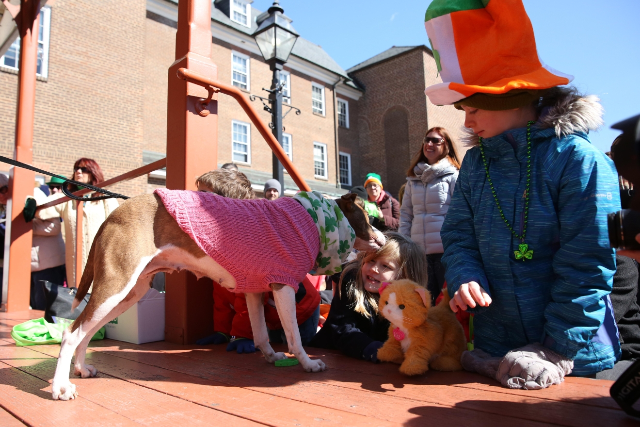 St. Patrick's Day came early for the dogs of Alexandria, who showed up in their best green outfits for a dog contest ahead of the town's parade on March 4. Awards were given to the most outrageously dressed pups, the luckiest and dogs who look the most like their owners. (Amanda Andrade-Rhoades/DC Refined)