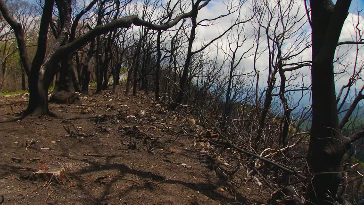 Burn scar from the Camp Branch fire. (Photo credit: WLOS Staff)