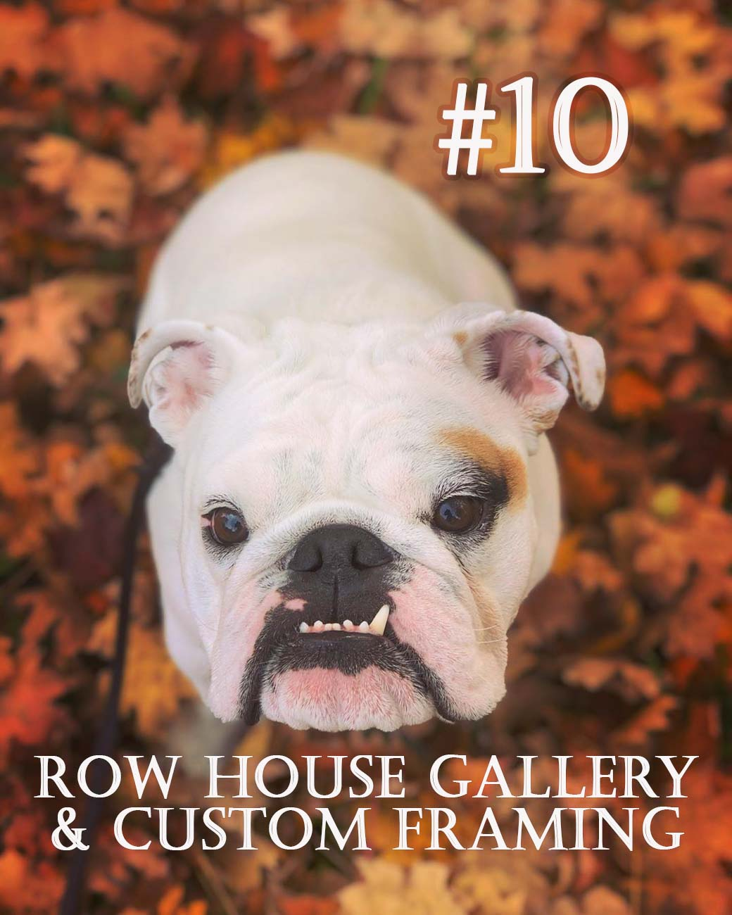 Image courtesy of Instagram user @mose_the_bulldog   via Discover Clermont // Published: 11.28.20