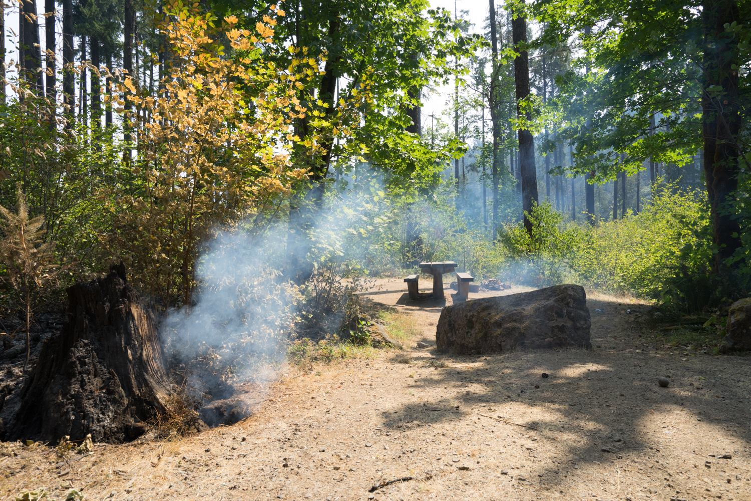 """Bedrock Campground along Fall Creek after the Jones Fire passed through. The fire burnt mostly brush and small trees,"" the USDA Forest Service said."